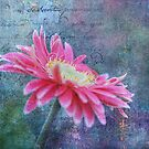 Pink Gerbera Daisy in Texture by Linda Trine