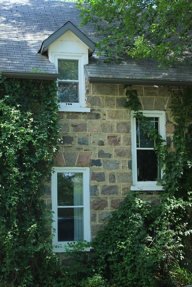 Windows and Ivy on a Wall by rhamm