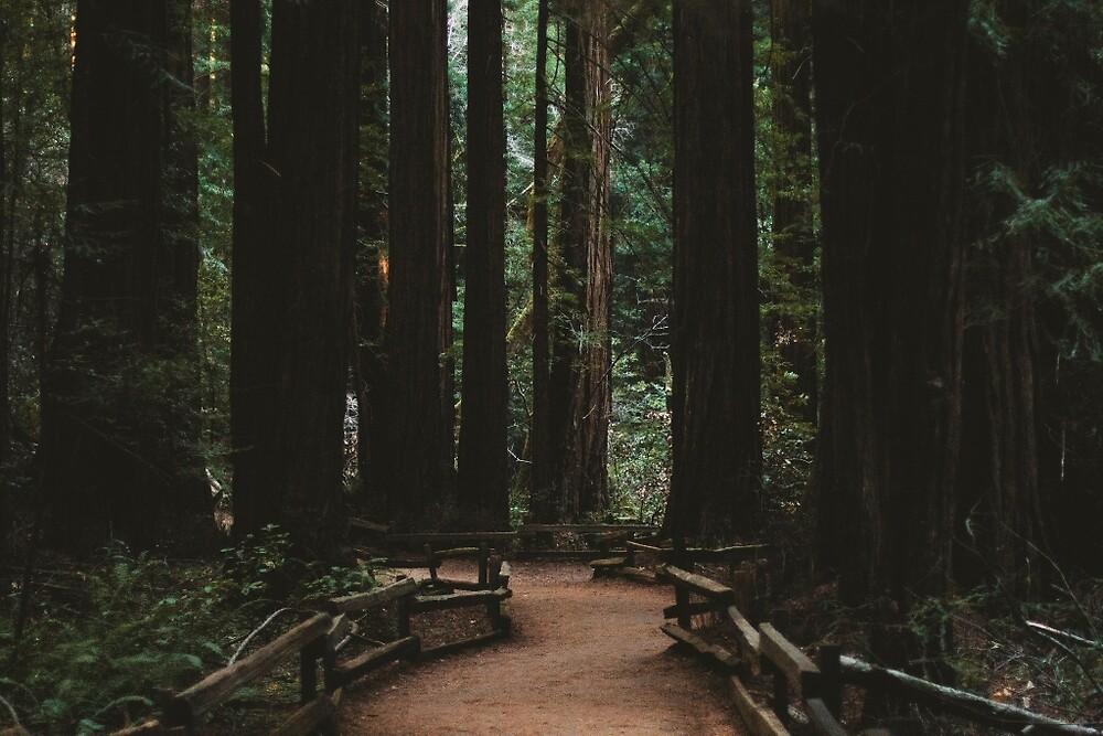 Muir Woods, CA by thathome