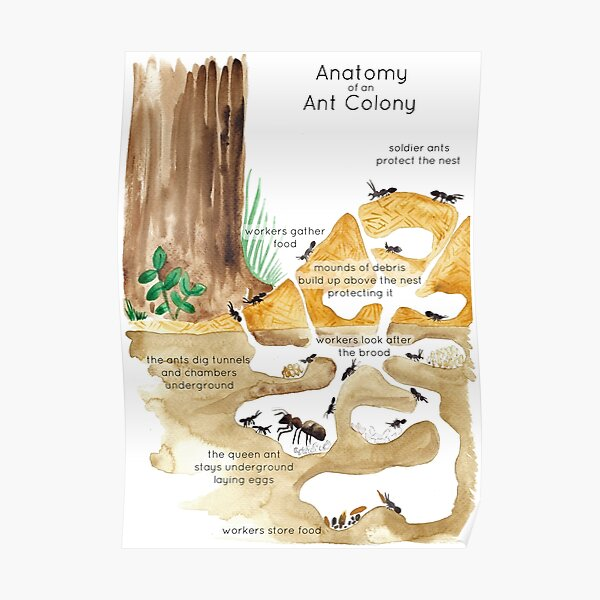 Ant Colony Poster