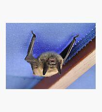 """Da Bat' Photographic Print"