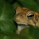 American Toad by Gregory L. Nance