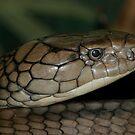 King Cobra by Gregory L. Nance