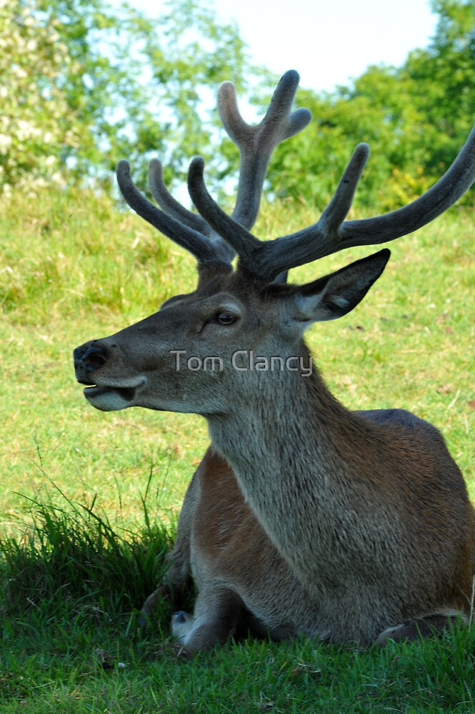 The Stag by Tom Clancy