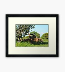 Deer on a summers day Framed Print