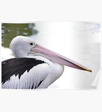 Pellie The Pelican Poster