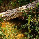 Fallen Tree over Stream by Renee D. Miranda