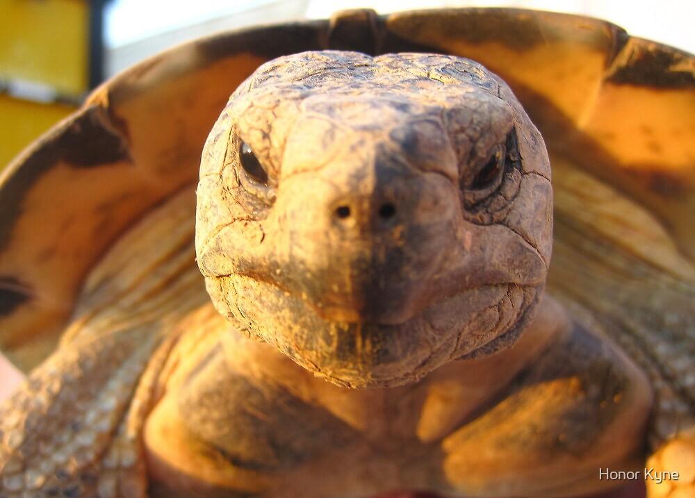 Tortoise by Honor Kyne