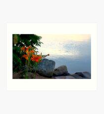 Waterside Lilies Art Print