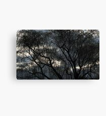 Winter Willow Canvas Print