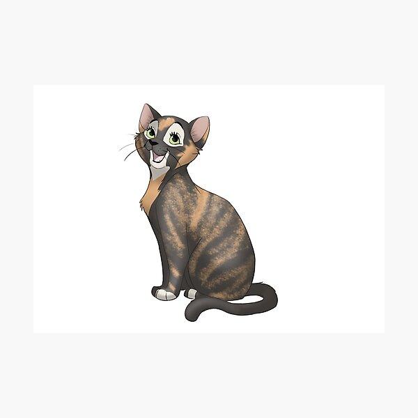 Chatty tortie cat Photographic Print