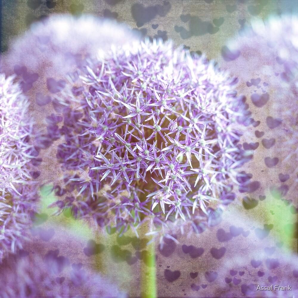 Vintage Allium Flowers by Assaf Frank