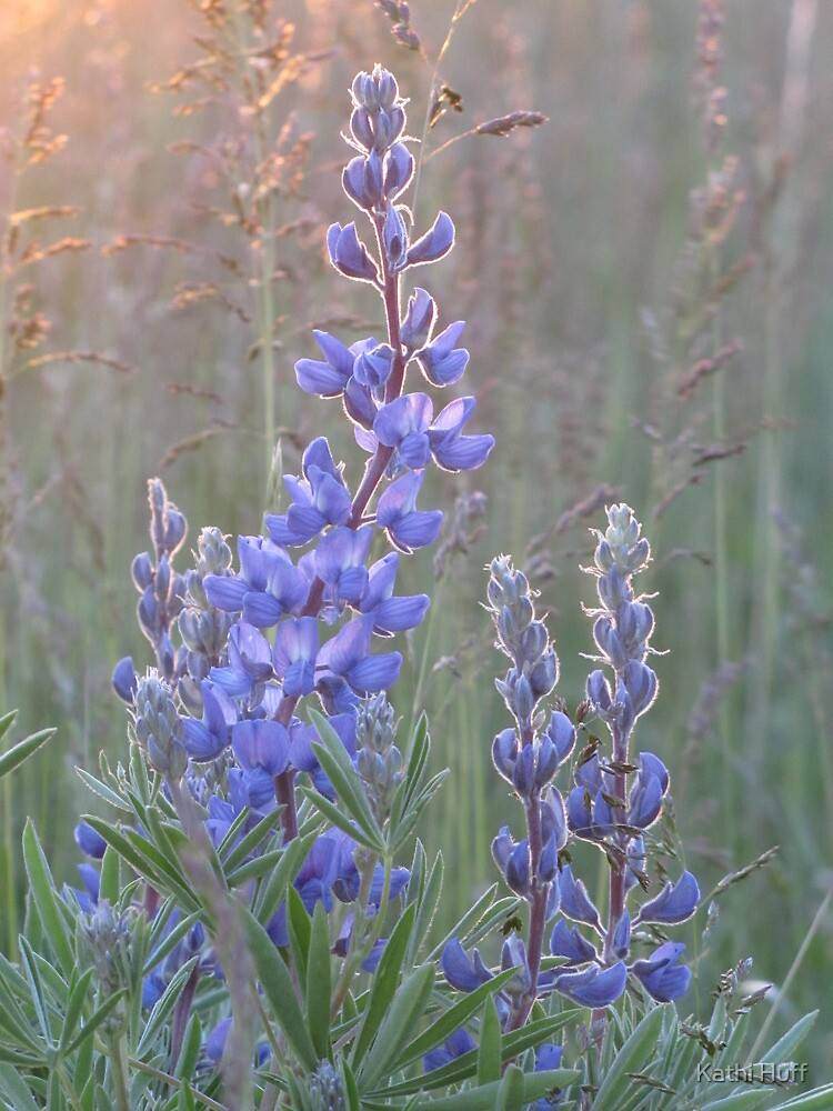 Soft Lupins by Kathi Huff
