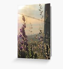 Fenced Lupins Greeting Card