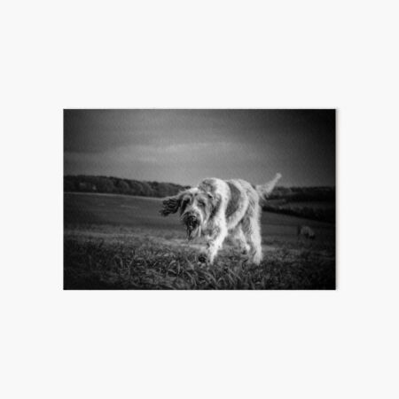 Brown Roan Italian Spinone Dog Art Board Print