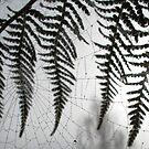 Fern Web by Heidi Schwandt Garner