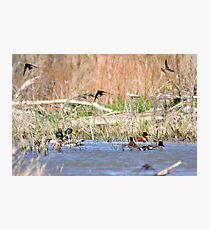 wings and wading Photographic Print