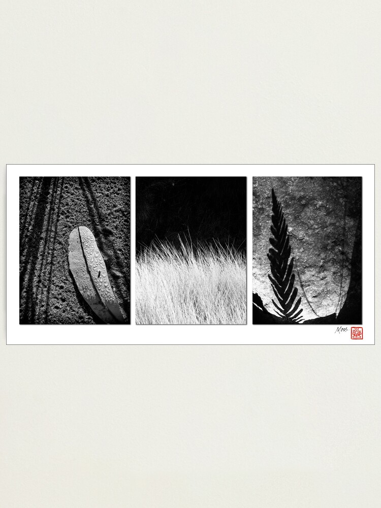 Alternate view of Leaf and Grass Photographic Print