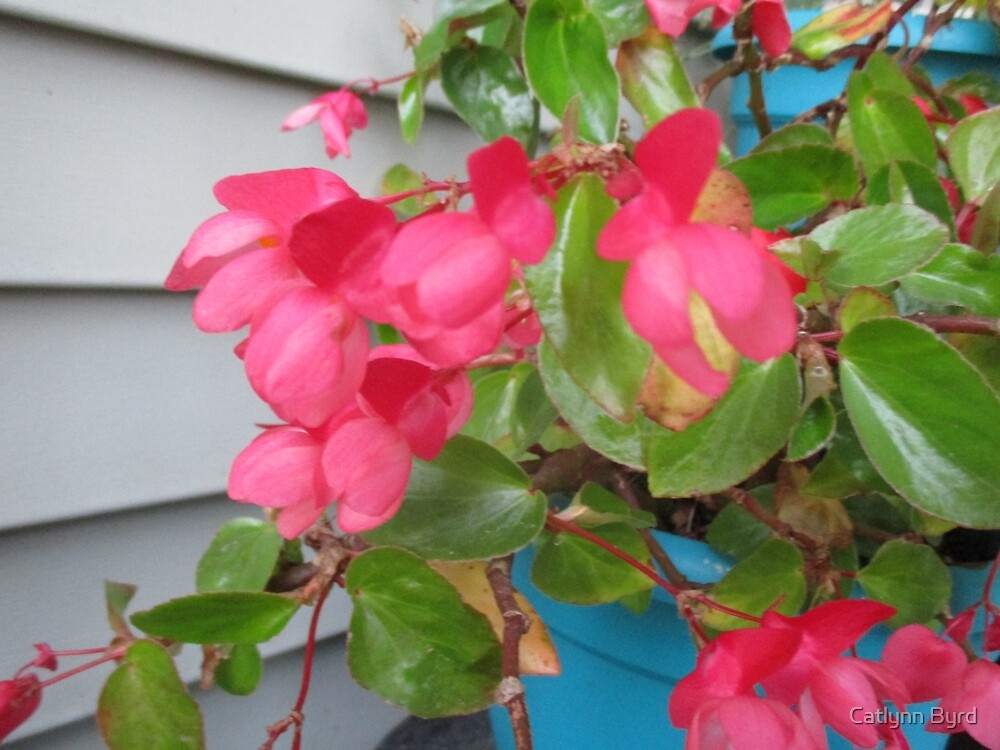 Potted Flower- Pink by Catlynn Byrd