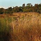Dry Wetlands by byronbackyard