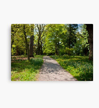 Path in the Woods Canvas Print