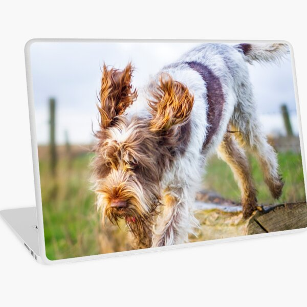 Jumping off a log Spinone Laptop Skin