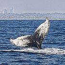 Having a whale of a time by Sarah Guiton