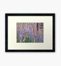 Lupin Blue Framed Print