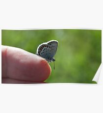 Butterfly sitting on a finger Poster