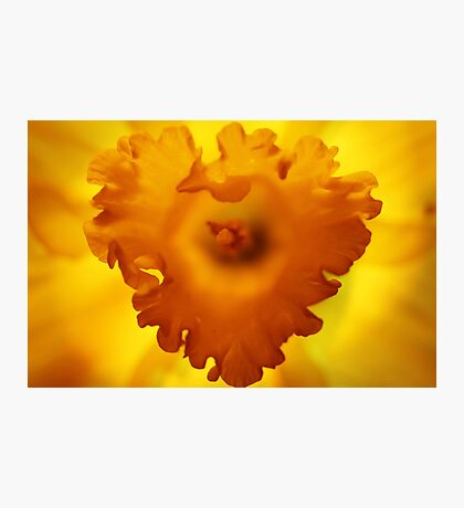 Heart Of Hope Photographic Print