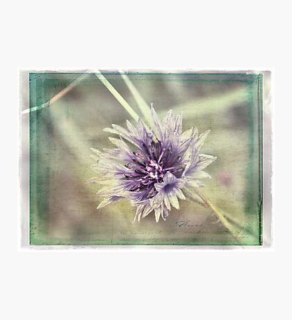 Pretty in Purple Photographic Print