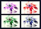 Four Seasons of Fractal Flowers by Georgia Wild