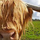 Hamish the Highland Bull by ACBPhotos