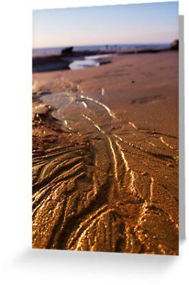 Tidal Evidence by Sandra Chung