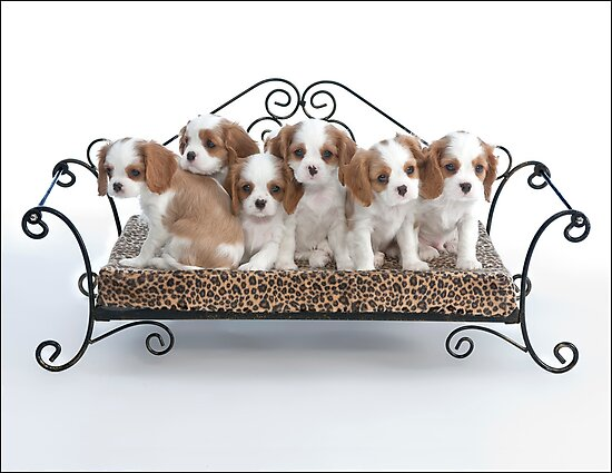 Briana's Pups by Michael Waine