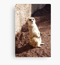 Cute Meercat Canvas Print
