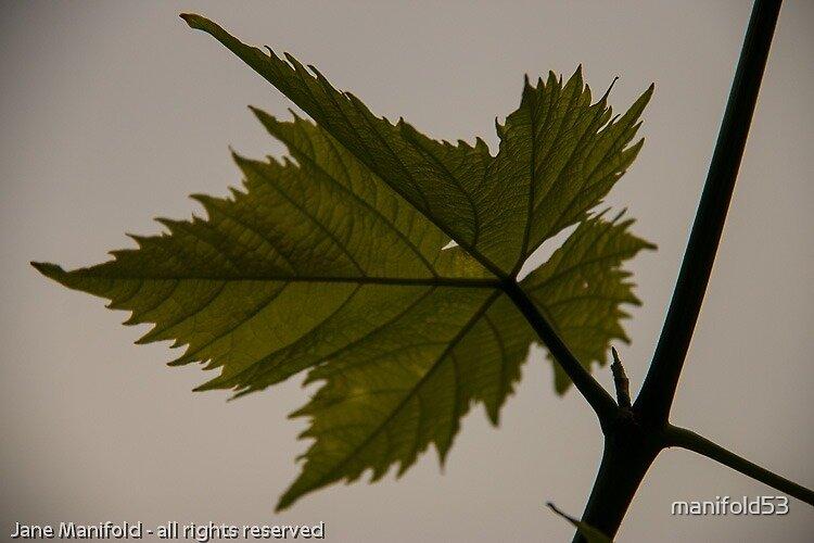New leaf by manifold53