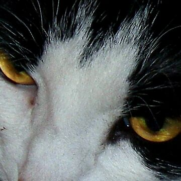 Sabrina's Eyes by Dayonda