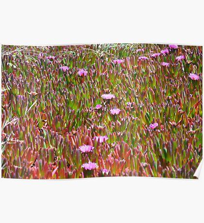 Monterey Succulent 3 Poster