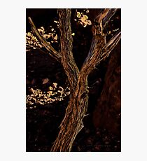 Screaming Tree Vomits Inner Poison Outwards In A Head Wind © Vicki Ferrari Photography Photographic Print