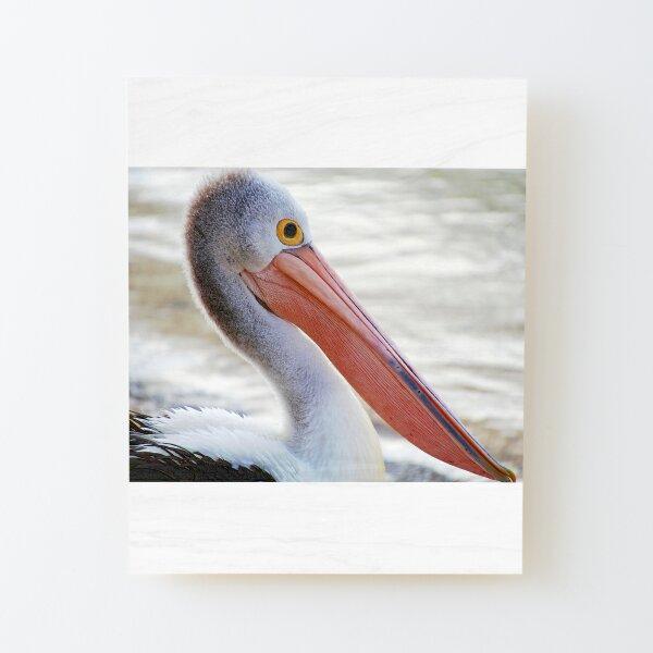 Pelican Pink Wood Mounted Print