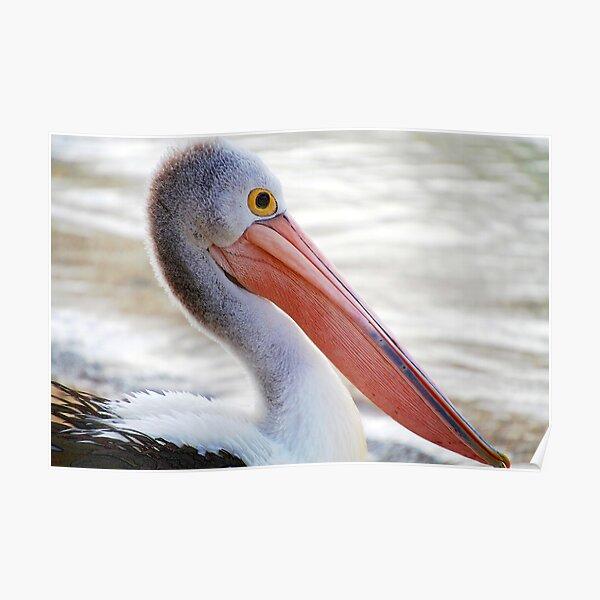 Pelican Pink Poster