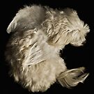 Dog by Conor  O'Neill