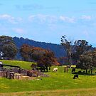 Australian Farm in Spring by Ronald Rockman