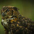 Great Horned Owl Profile by Joe Jennelle
