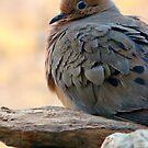 Ruffled Feathers by Susan McKenzie Bergstrom