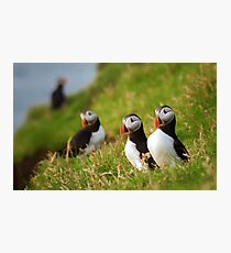 Puffin Pair Photographic Print