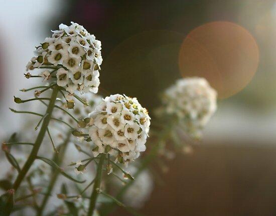 Honey flowers by fourthangel