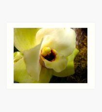 Receptive Orchid Art Print