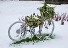 Snowy Bicycle by AnnDixon